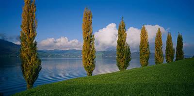 Row Of Poplar Trees Along A Lake, Lake Poster
