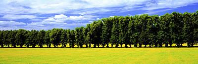 Row Of Trees, Uppland, Sweden Poster