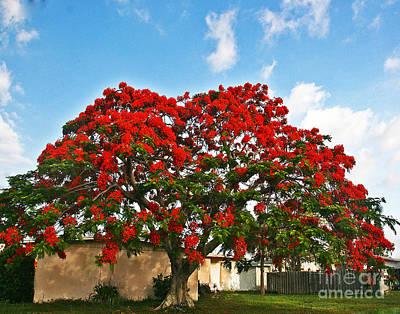 Royal Panciana Tree Poster