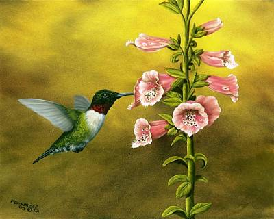 Ruby Throated Hummingbird And Foxglove Poster