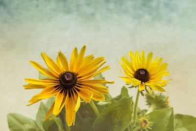 Rudbeckia Flowers Poster by Kim Hojnacki