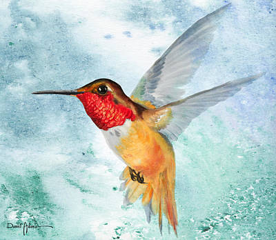 Da199 Rufous Humming Bird By Daniel Adams Poster