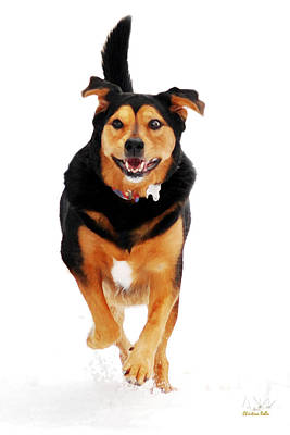 Running Dog Art Poster
