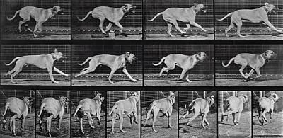 Running Dog Poster