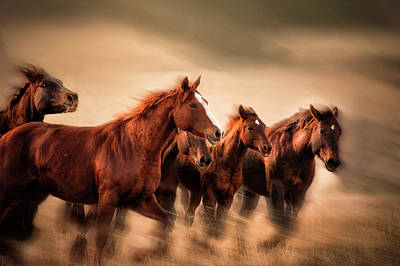 Running Horses, Blur And Flying Manes Poster by Sheila Haddad