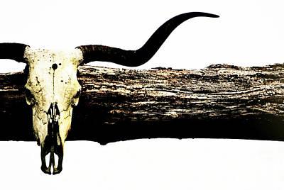 Rustic Longhorn Poster