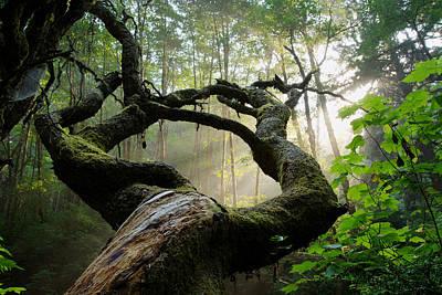 Sacred Forest Poster by Dustin  LeFevre