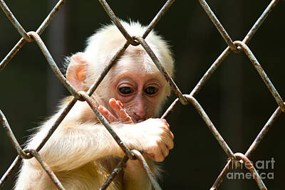 Sad Little Monkey  Poster