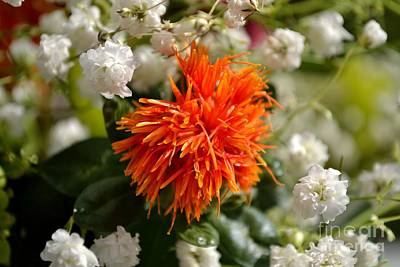 Safflower Amongst The Gypsophilia Poster