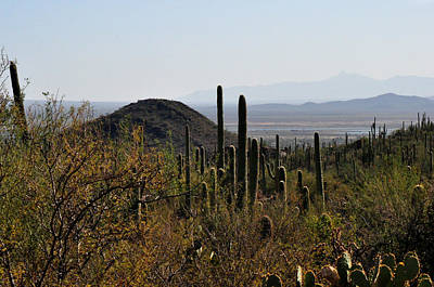 Saguaro Cactus And Valley Poster by Diane Lent