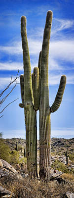 Saguaro Couple Poster by Kelley King