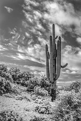 Saguaro In Desert Snow Poster