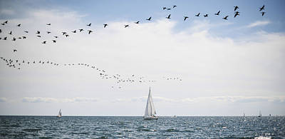 Sailboats Cruise The Waters Of Lake Poster by James MacDonald