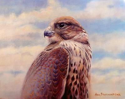 Saker Falcon - Ayra Poster by Anna Franceova
