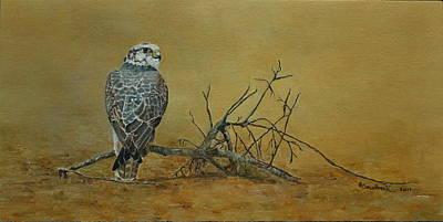 Saker Falcon In Desert Poster by Erna Goudbeek