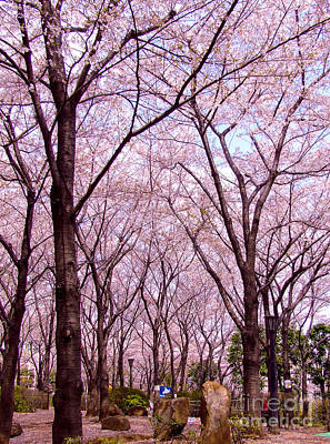 Poster featuring the photograph Sakura Tree by Andrea Anderegg