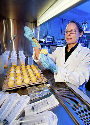 Salmonella Egg Contamination Analysis Poster