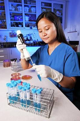 Salmonella Farm Bacteria Research Poster