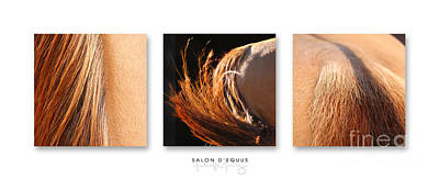 Salon D'equus Dark Poster by Michelle Twohig