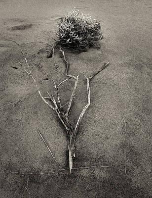 Salt Bush Poster by Tim Nichols