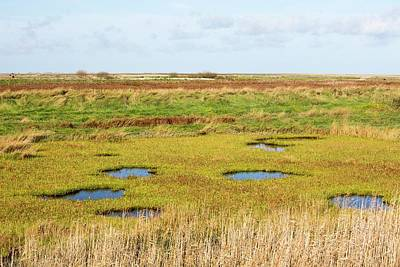 Saltmarsh Poster by Ashley Cooper