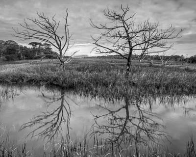 Salty Marsh At Jekyll Island In Black And White Poster by Debra and Dave Vanderlaan