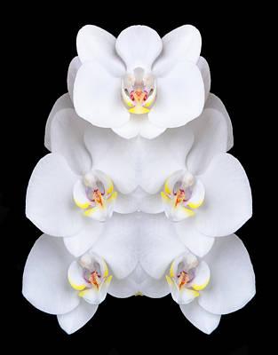 Samurai Orchids Poster by Robert Jensen