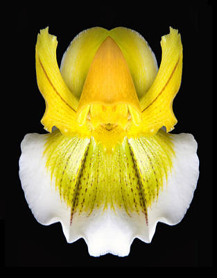 Samurai Warrior Orchid Poster by Robert Jensen