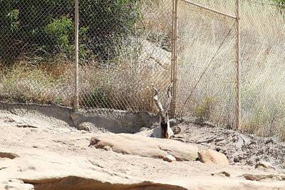 San Diego Zoo - 1212222 Poster