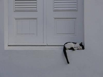 San Juan - Let Sleeping Cats Lie Poster by Richard Reeve