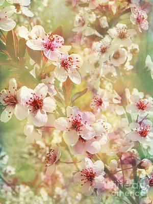 Sand Cherry Flourish Poster by Kathi Mirto