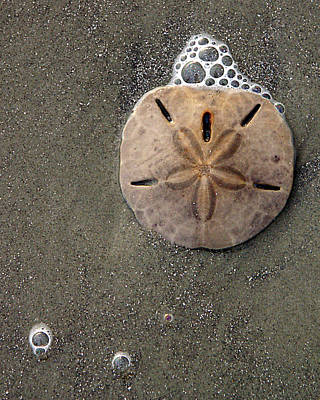 Poster featuring the photograph Sand Dollar by Tom Romeo