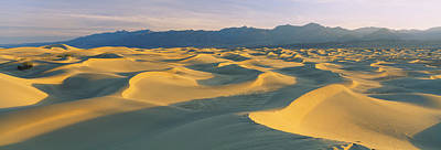 Sand Dunes In A Desert, Grapevine Poster by Panoramic Images