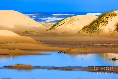 Sand Dunes On The Gulf Of Mexico Poster by Louise Heusinkveld