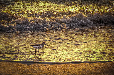 Sand Piper Poster by Marvin Spates