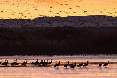 Sandhill Cranes And Other Waterfowl Poster