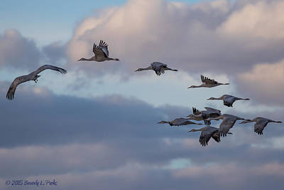 Sandhill Cranes Poster by Beverly Parks