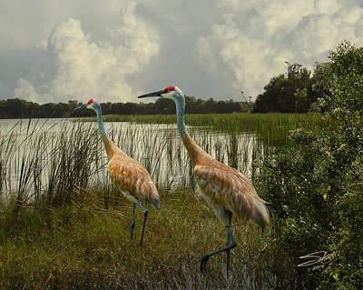 Sandhill Cranes Courting Poster by Schwartz