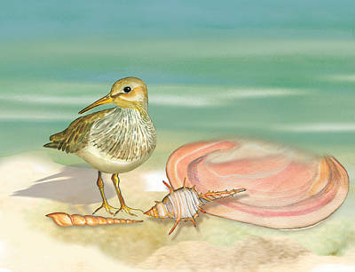 Sandpiper On Beach Poster by Anne Beverley-Stamps