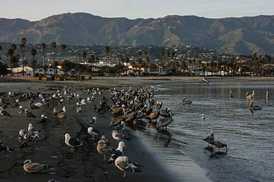 Poster featuring the photograph Santa Barbara Beach Crowd  by Georgia Mizuleva