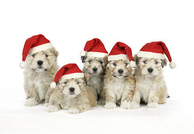 Santa Puppy Dogs Poster