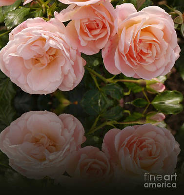 Satin Roses Poster by Christiane Schulze Art And Photography