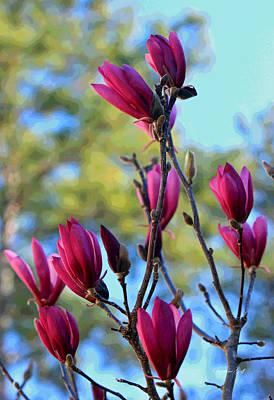Saucer Magnolia Heaven Poster