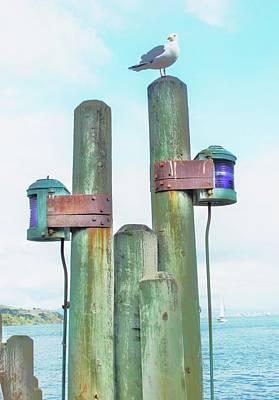 Sausalito Seagull Poster by John King