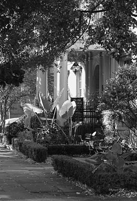 Savannah Scenic In Black And White Poster by Suzanne Gaff