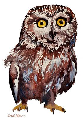Da148 Saw Whet Owl Daniel Adams Poster