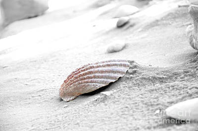Poster featuring the photograph Scallop Shell by Robert Meanor