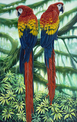 Scarlet Macaws Poster by larry Taugher