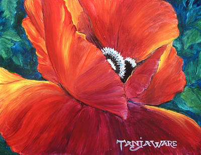 Scarlet Poppy Poster by Tanja Ware