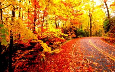 Scenic Autumn Drive Poster by L Brown